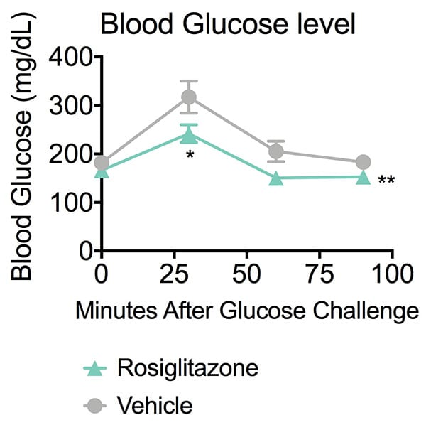 Blood glucose level in rosiglitazone or vehicle-treated ob/ob mice following glucose challenge.