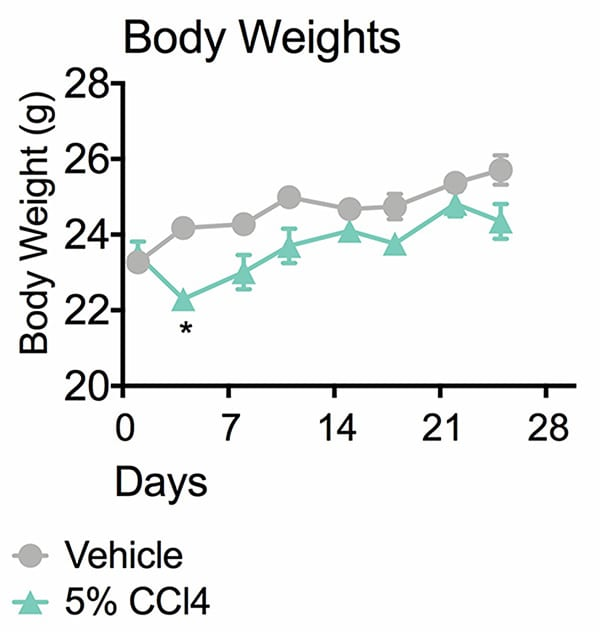 Graph showing drop in body weight in animals receiving 5% CCl4 from day 4