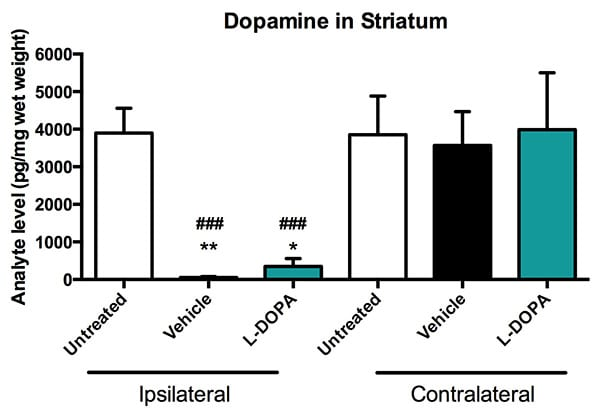 Concentration of dopamine in the stiatum of L-DOPA or vehicle-treated and untreated mice.