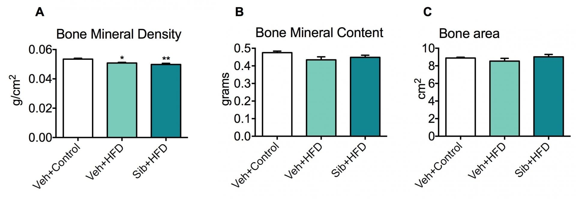 Bone Marrow Density Scan showed no significant changes in Bone Mineral Content (B) or Bone Area (C) between all groups