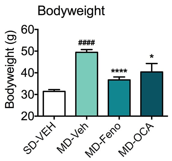 Body weight of mice fed a standard or modified diet and treated with fenofibrate or NASH candidate, obeticholic acid (OCA).