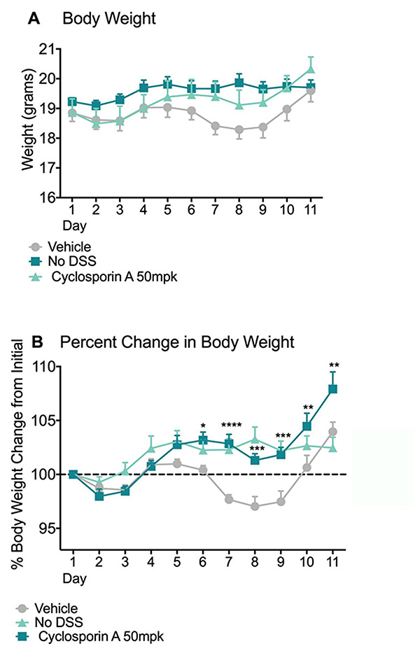 Graphs showing Body Weight and Percent Change in Body Weight in the DSS Models of Colitis
