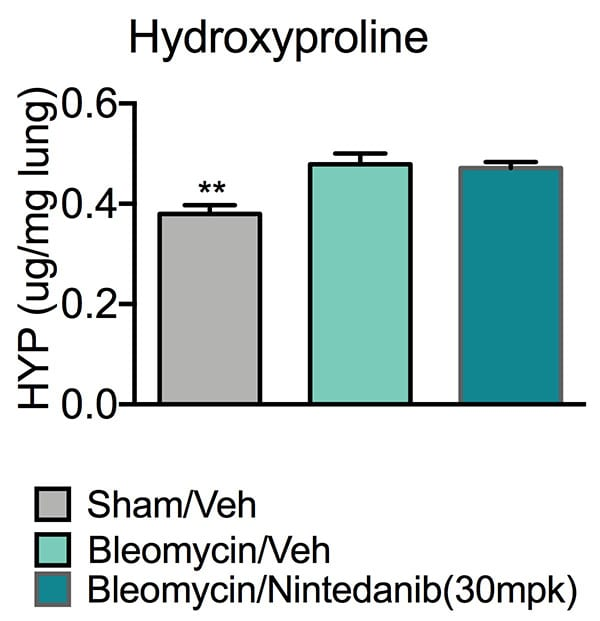Pulmonary fibrosis models supportive chart showing high levels of hydroxyproline levels in Bleomycin/vehicle animals' lungs