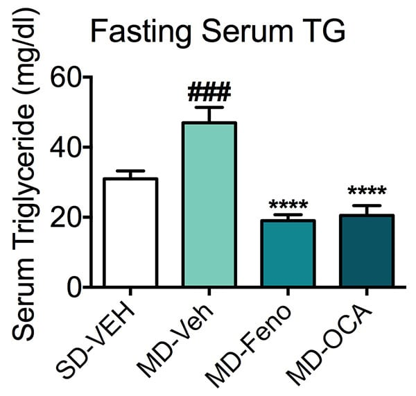 Concentration of serum trigylcerides in mice fed a standard or modified diet and treated with fenofibrate or NASH candidate, obeticholic acid (OCA).