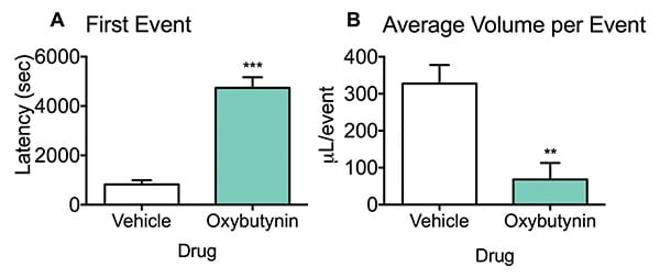 Oxybutynin increases the latency to first urination event and decreases the average urine volume per event in a micturition model.