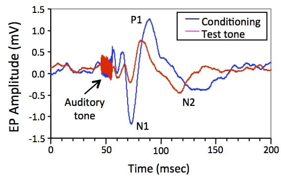 Hippocampal sesory evoked potentials to an auditory conditioning tone (blue) followed 0.5 sec later by a test tone.