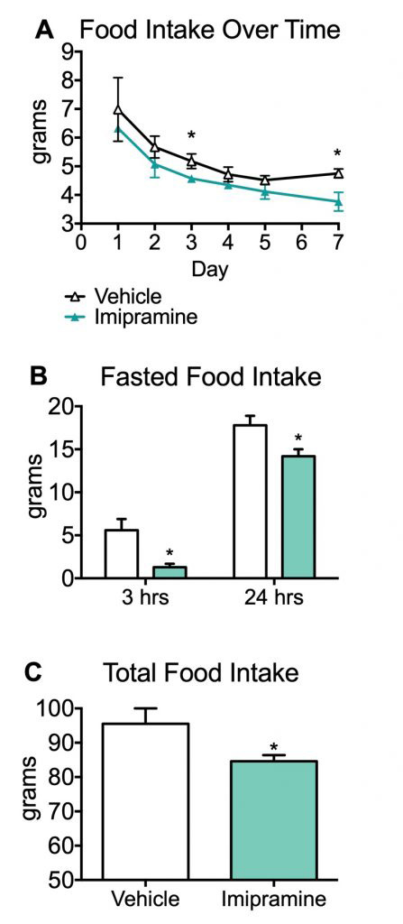 Food intake over time, fasted food intake and total food intake during treatment of Imipramine.