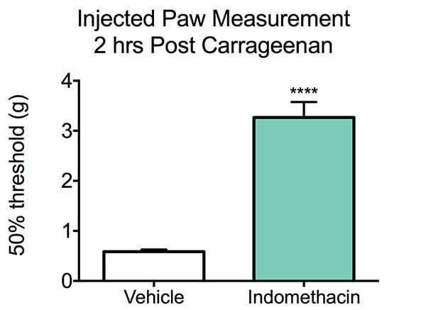 Injected Paw Measurement 2 Hrs Post Carrageenan