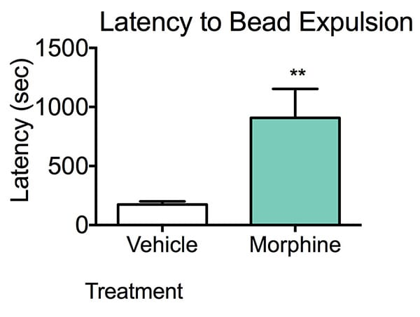 Graph showing higher latency in Morphine treated mice suggesting colonic propulsive motility