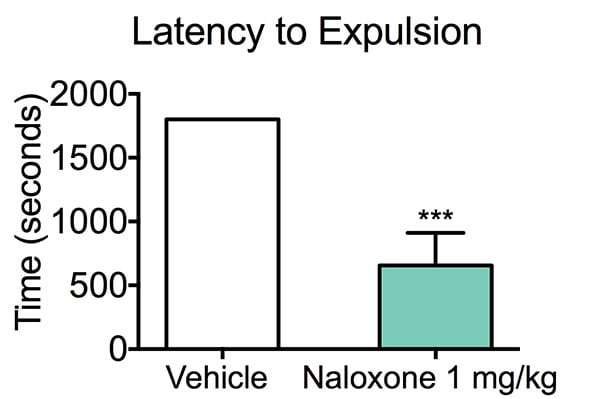 Mice treated with vehicle had a significantly increased expulsion time compared to Naloxone-treated mice