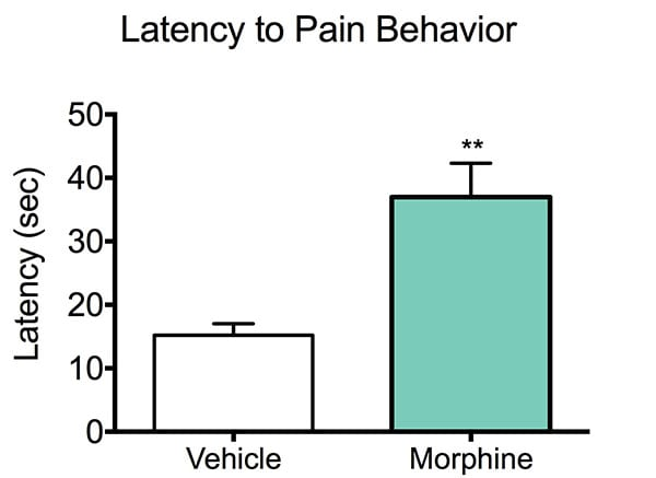 Latency to paw withdrawl in mice treated with morphine and control mice during the hot plate test.
