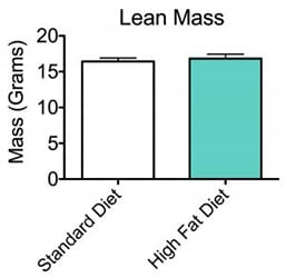 Tissue area and total tissue mass results after bone marrow density scan