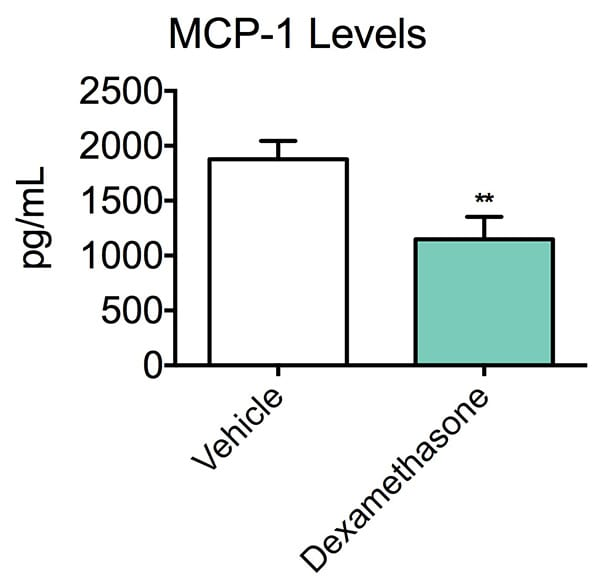 Concentration of MCP-1 following treatment with a vehicle or dexamethosone in the thioglycollate-induced peritonitis model.