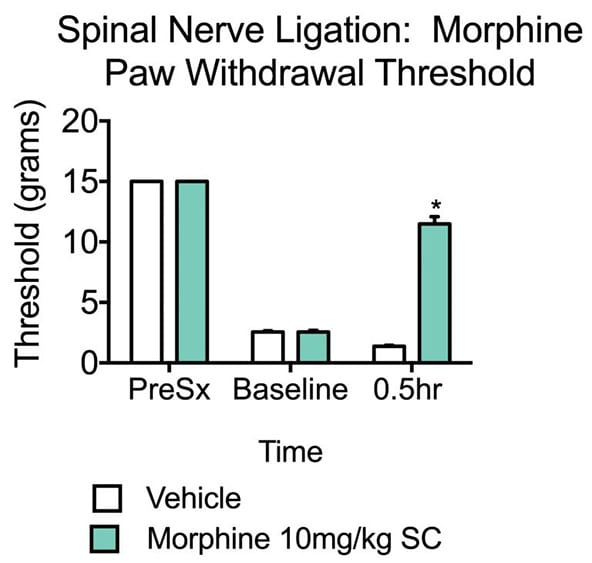 Paw withdrawal threshold in gabapentin and vehicle-treated rats that have undergone spinal nerve ligation.