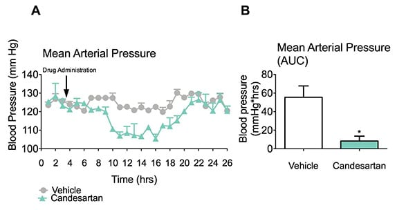 Candesartan significantly attenuated arterial blood pressure (A-B) in spontaneous hypertensive rats (*p<0.05) while vehicle treated rats maintained elevated blood pressure