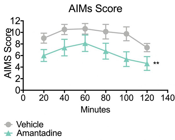 Abnormal involuntary movement score in mice treated with amantadine in the 6-ODHA lesion model of parkinson's disease.