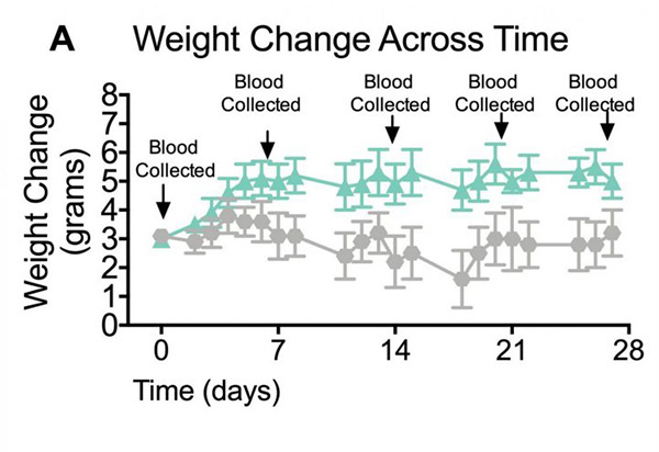 Weight change and leptin concentrations in mice fed a normal diet and a western high-fat diet.